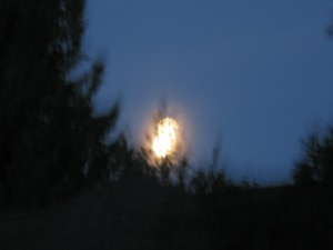 Moon coming out of a glass blowing oven just behind the trees